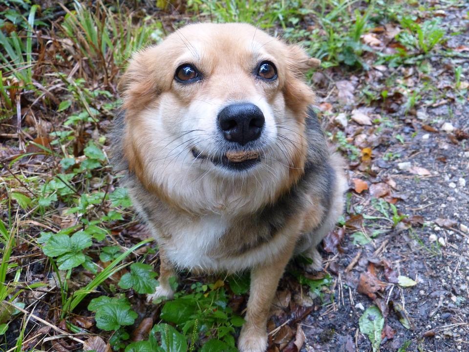 Dinovite Reviews: Premium Dog Food or